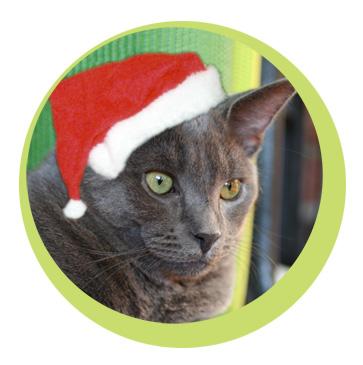 healthy holiday pets