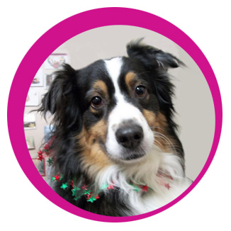 piper healthy holiday pets