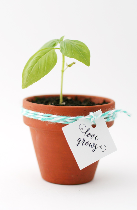 kitchen shower windowsill garden favors